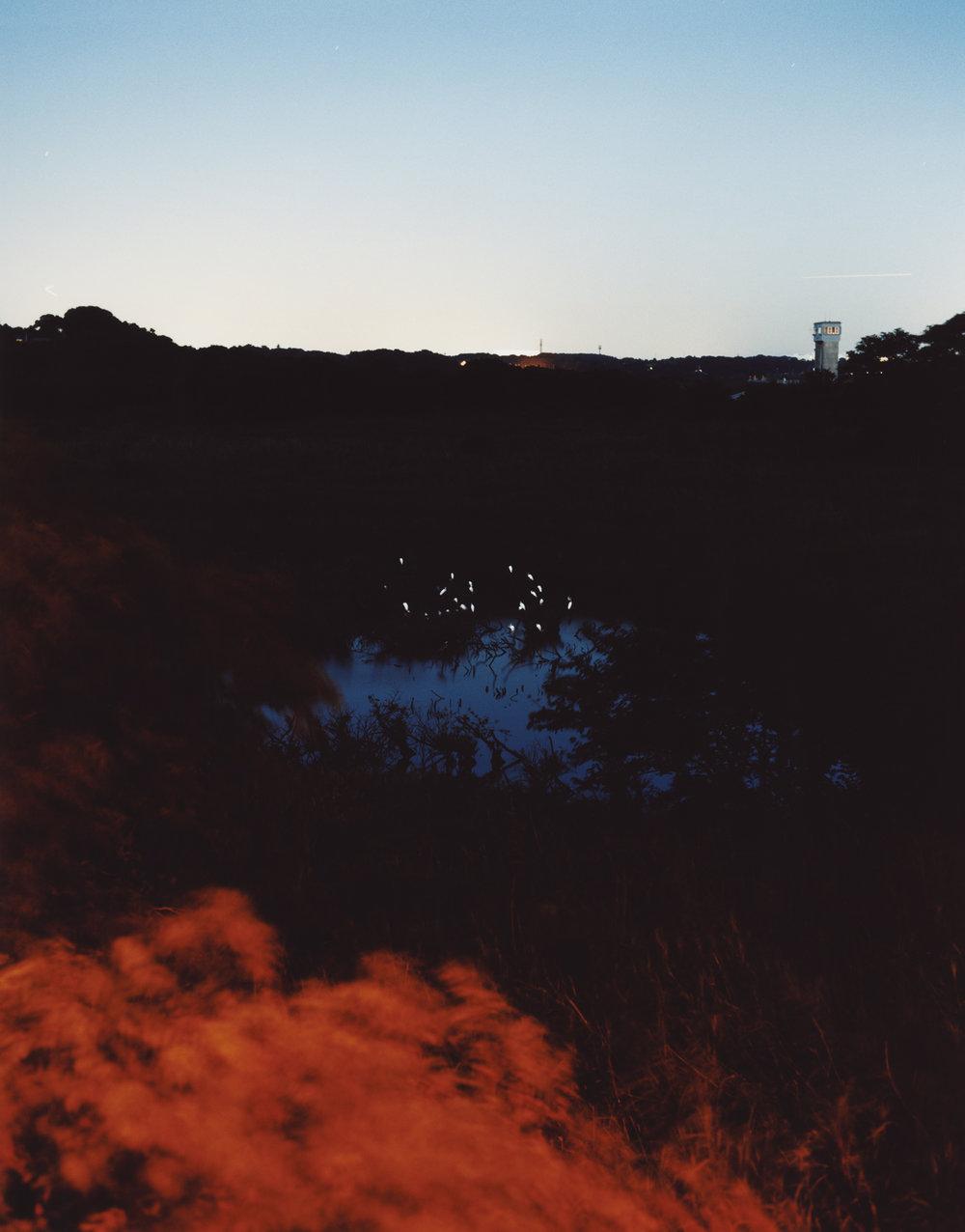 Around a pond 03