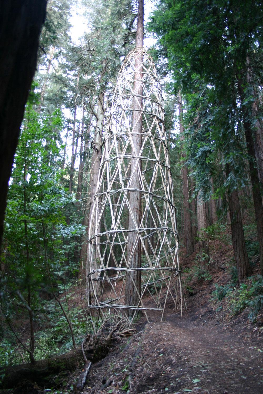 Christopher Drury - Redwood Vortex