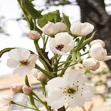 5x5 Flowers.jpg