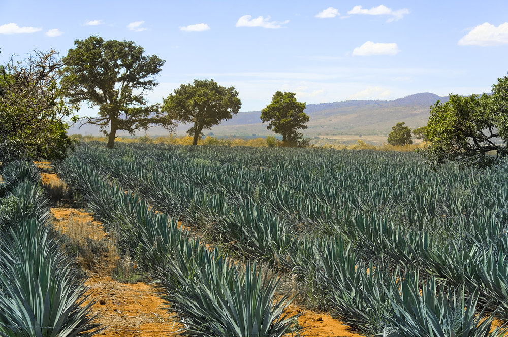 Tequila-Tour-2.jpg