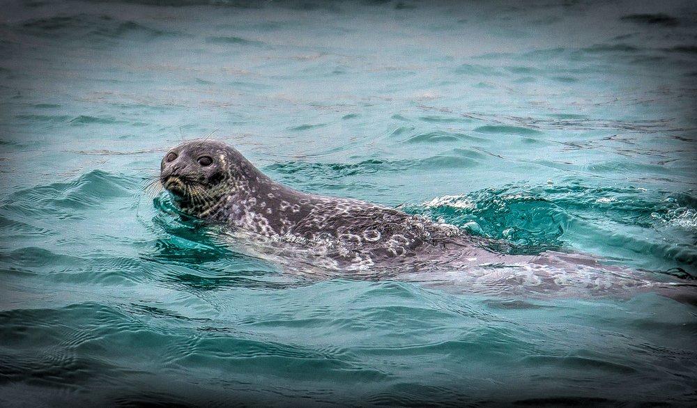 ioffe one ocean crocker bay devon island Ken Burton-7_tonemapped.jpg