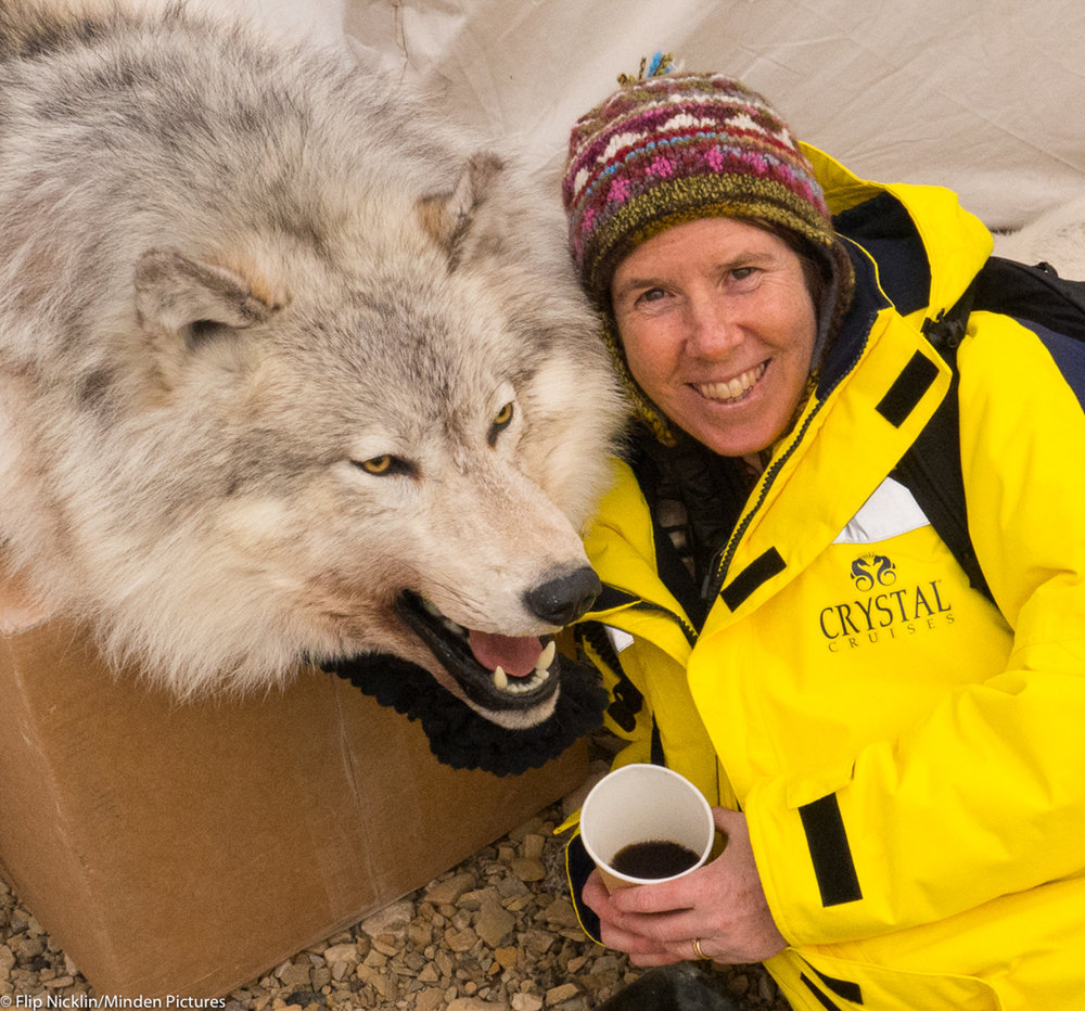 Linda having coffee with a wolf in Cambridge Bay last summer (credit: Flip Nicklin/)
