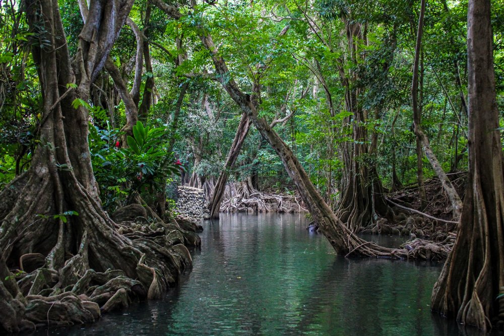 indian river.jpg