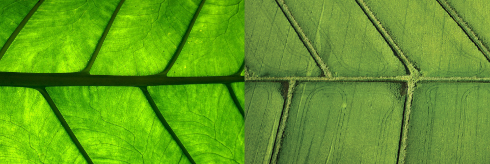 Leaf Vein & Agricultural Fields