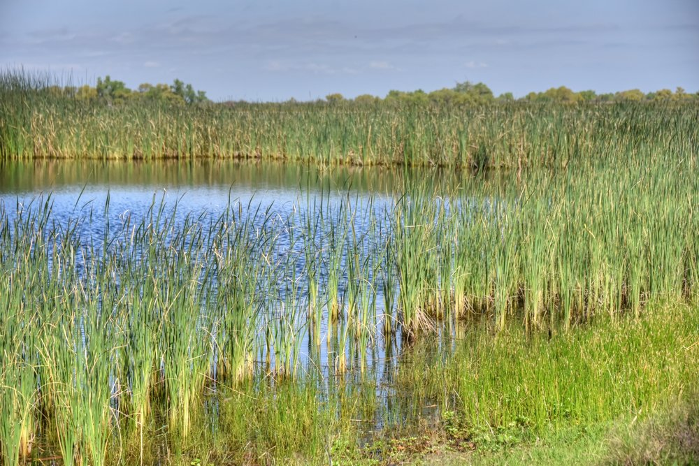 Constructed wetlands provide greater environmental and recreational benefits than a traditional treatment facility.
