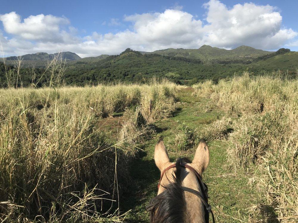 View from horseback at Hana Ranch.