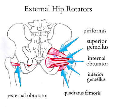 external-hip-rotatorsb.jpg
