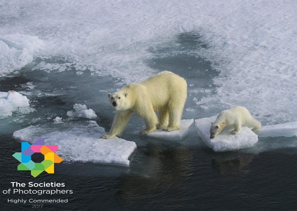 Polar Bear & Cub - Svalbard