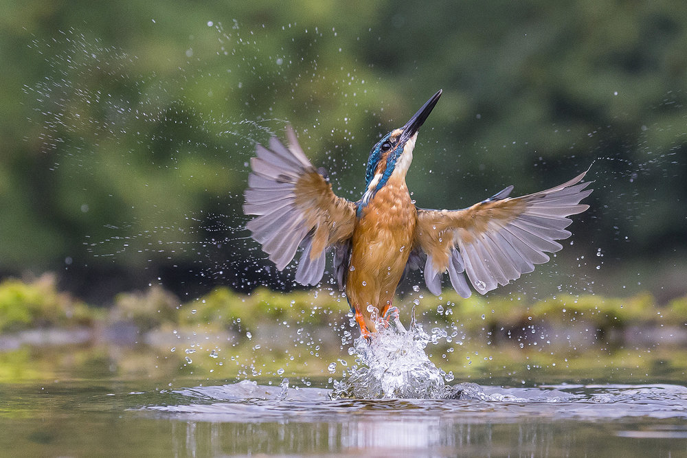 Kingfisher Angel