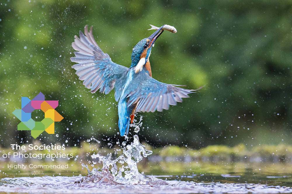 Kingfisher Catch
