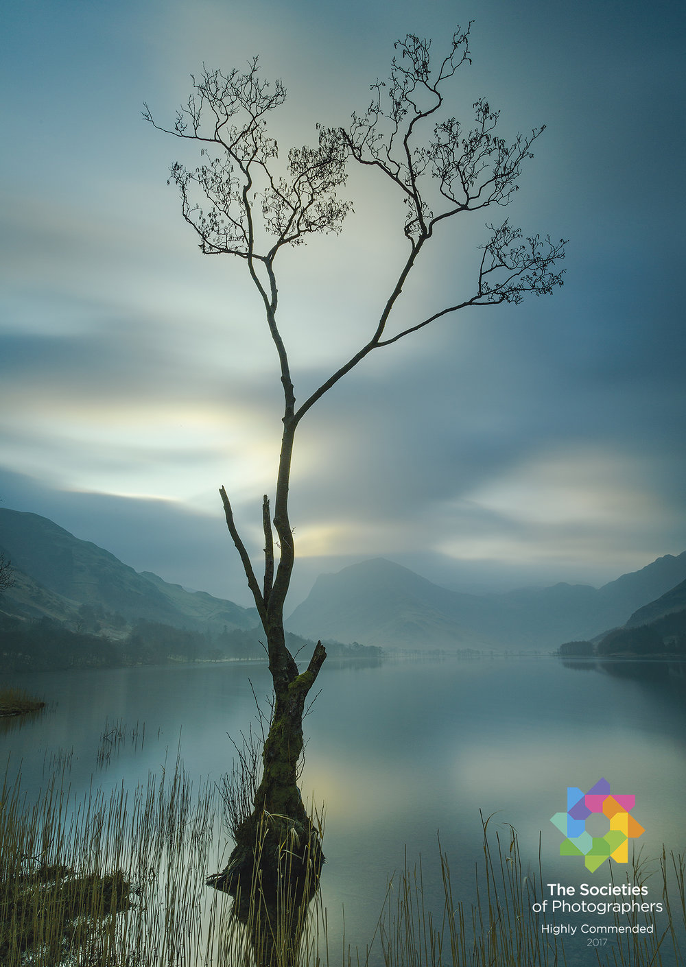 The Buttermere Tree.jpg
