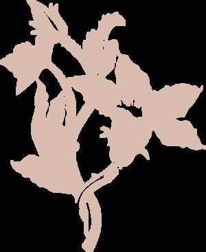 zucca-flower.png