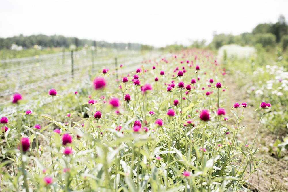 Flower Farming + Floral Design