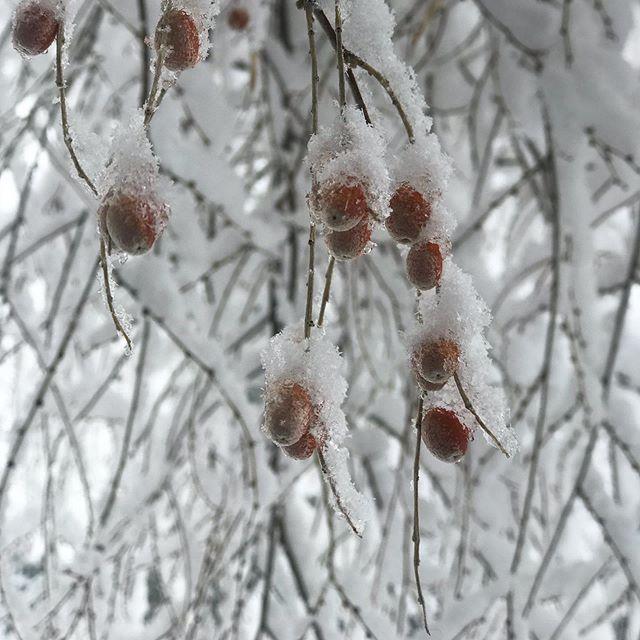 S N O W D A Y || All that That powerful Full Moon + Lunar Eclipse energy! ❄️🌀 #beautahful #highvibrations #snow