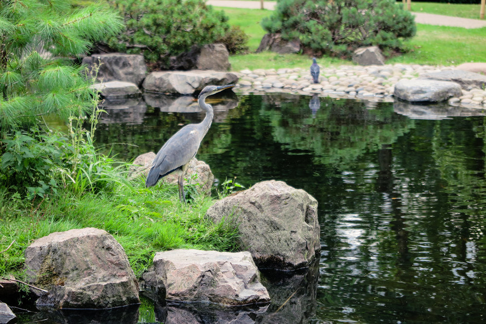 bird Kyoto Garden Holland Park