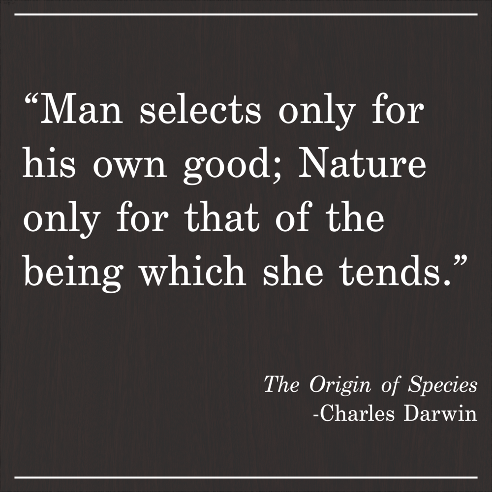 Daily Quote The Origin of Species by Charles Darwin