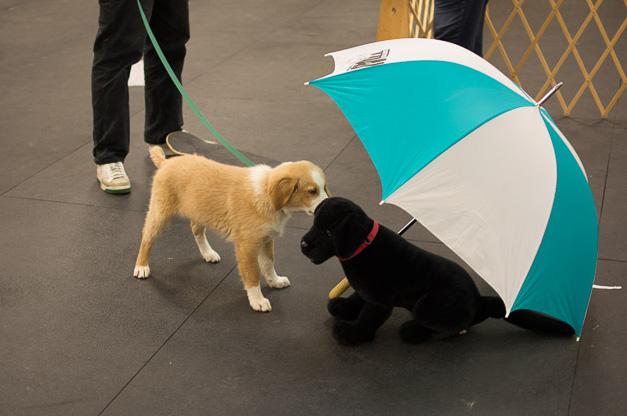 puppysocial reduce.jpg
