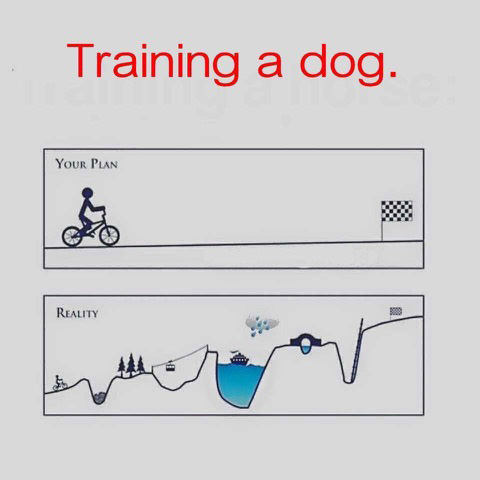 Training a dog copy.jpg