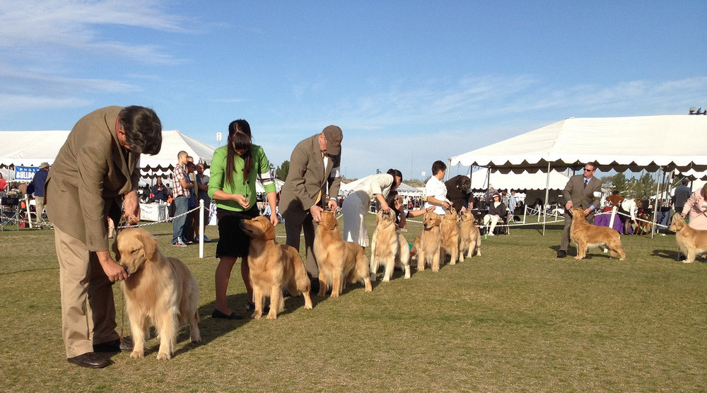 Dog show outside banner.jpg