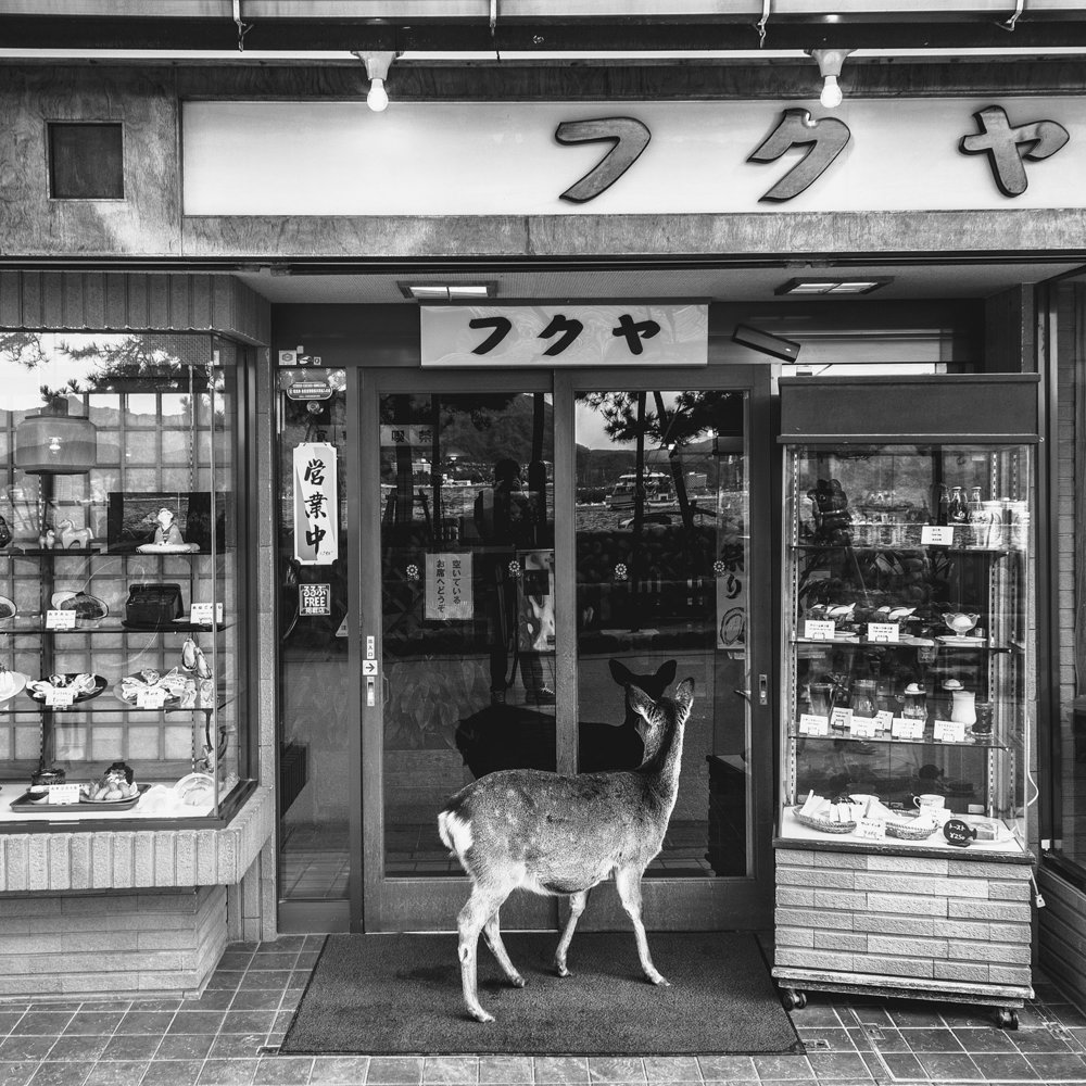 Deer of Miyajima