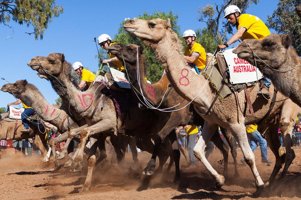 CamelCup.jpg