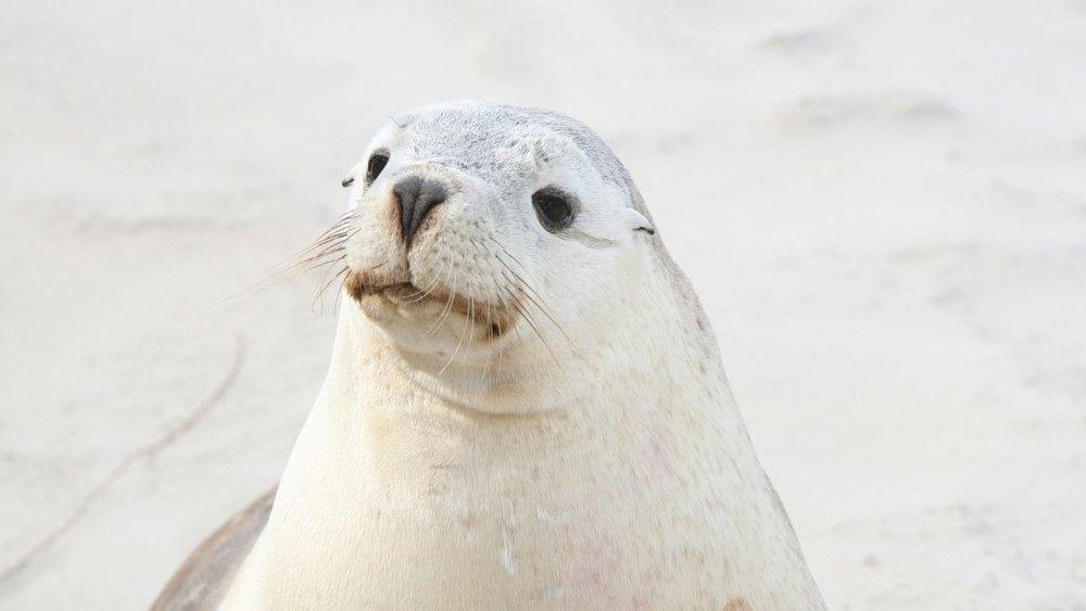 18-Abundant-Wildlife-Southern-Ocean-Lodge-1200x675.jpg