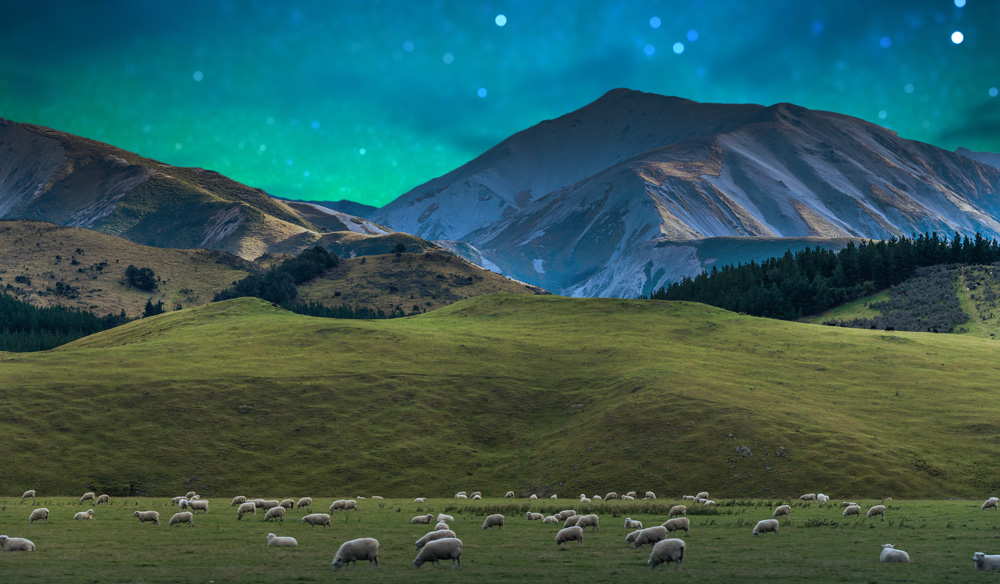 aurora-australis-new-zealand-cows.jpg