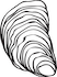 oyster small (1).png