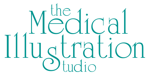 The Medical Illustration Studio