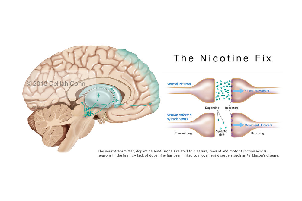 Nicotine, Dopamine and the Brain