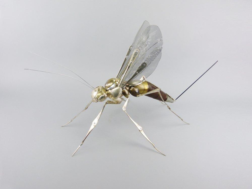 wood wasp  .JPG
