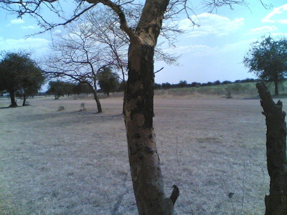 a dry land.jpeg.jpg