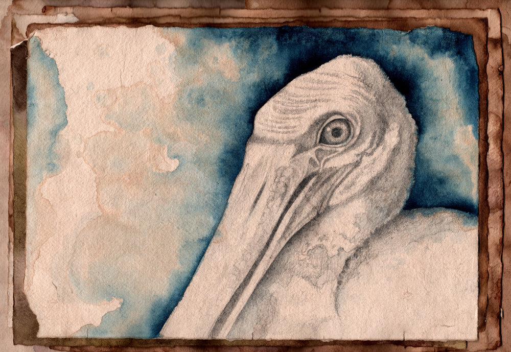 Bird 1- Scan 3.jpg