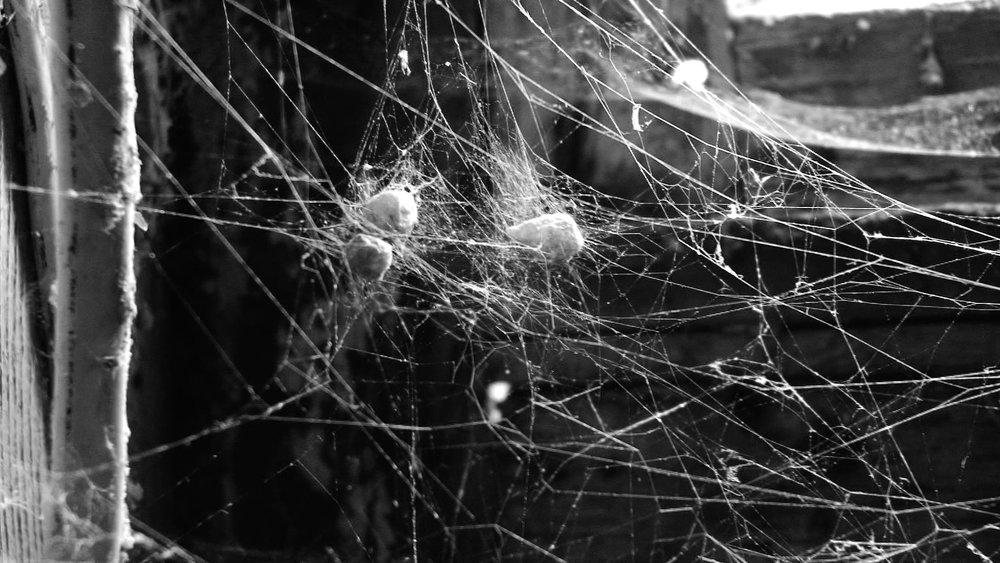 TAPE 2-13111-36 spider web.jpg