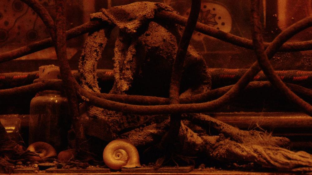 Snail & Wires.jpg