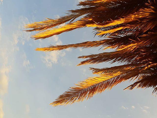 Diciembre al sol!! 😎😍 #marewaformentera #marewaexperience #formentera #ibiza #doradosalsol #formenterawinter