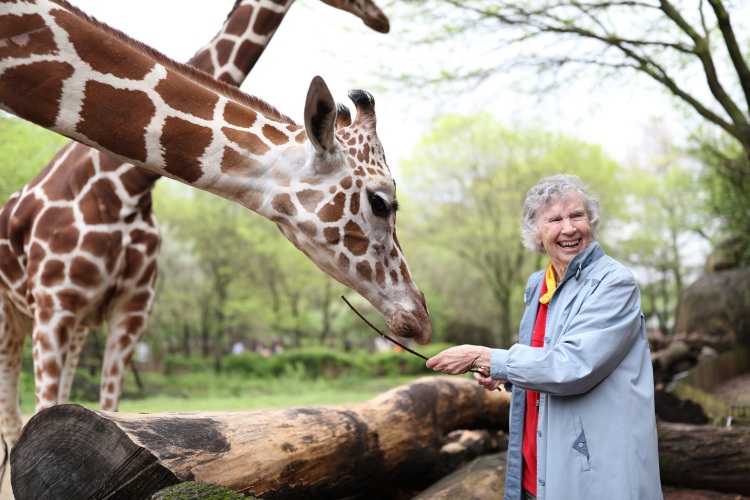 10.Anne Innis Dagg feeding giraffe.jpg