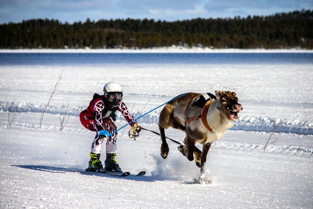 Reindeer Racing, Inari - Finland.jpg