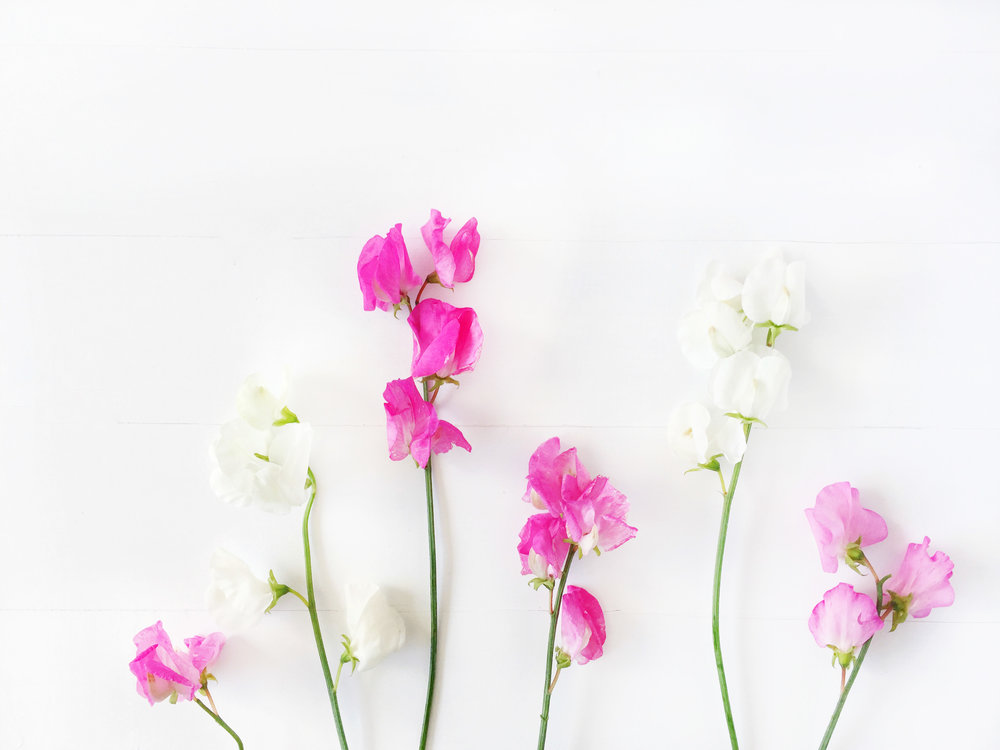 CC_Floral_H9.jpg