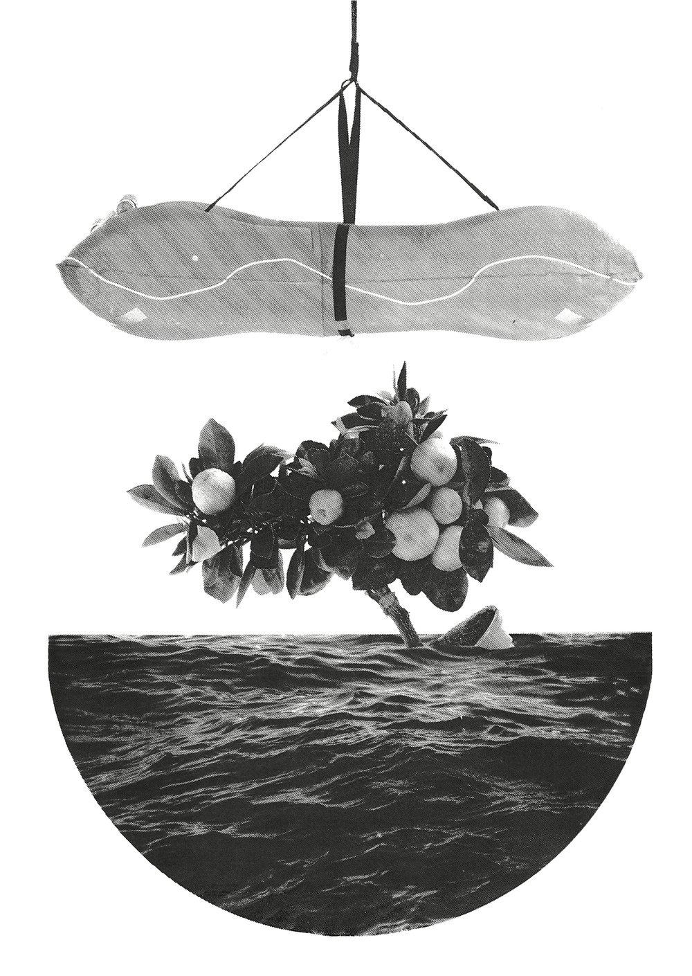 Aqua Culture 3