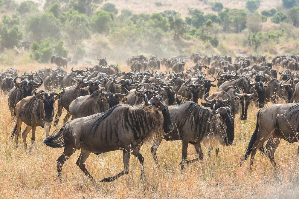 160804-Maasai Mara-029.jpg