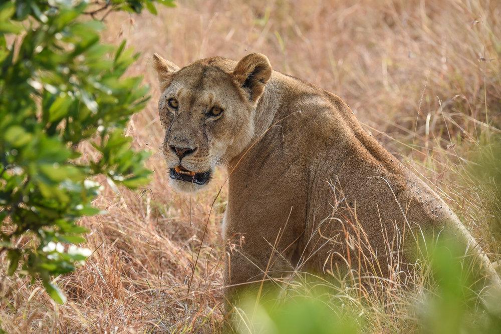 160804-Maasai Mara-013.jpg