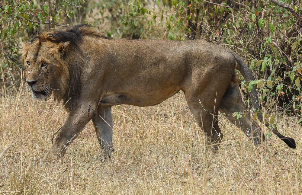 160804-Maasai Mara-048.jpg