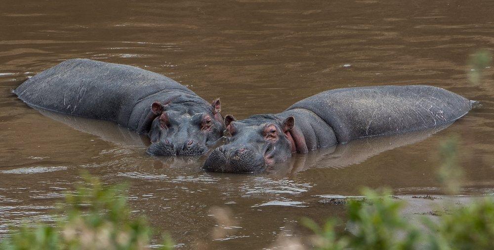160804-Maasai Mara-065.jpg