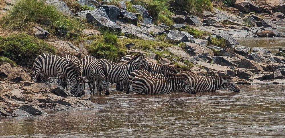 160804-Maasai Mara-057.jpg