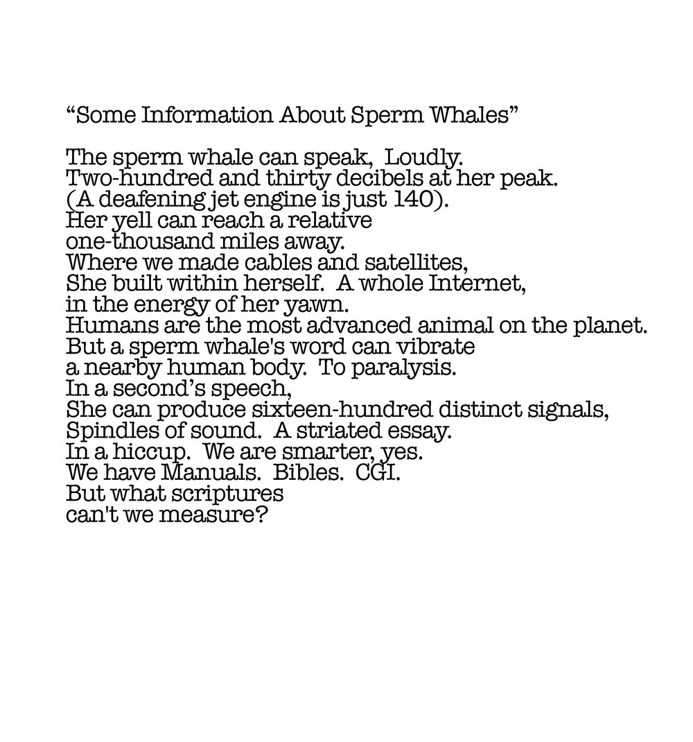 some information about sperm whales.jpg