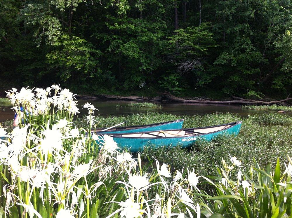 Cahaba River Lilies, Alabama