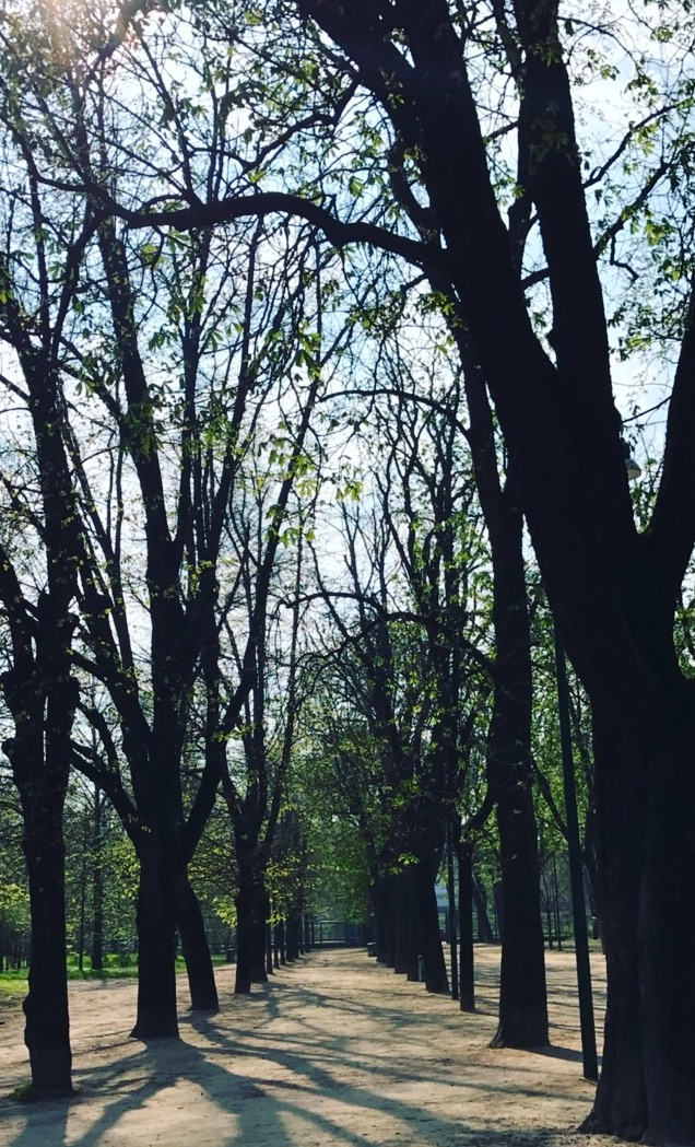 Parco Sempione — the surroundings that cradled me.