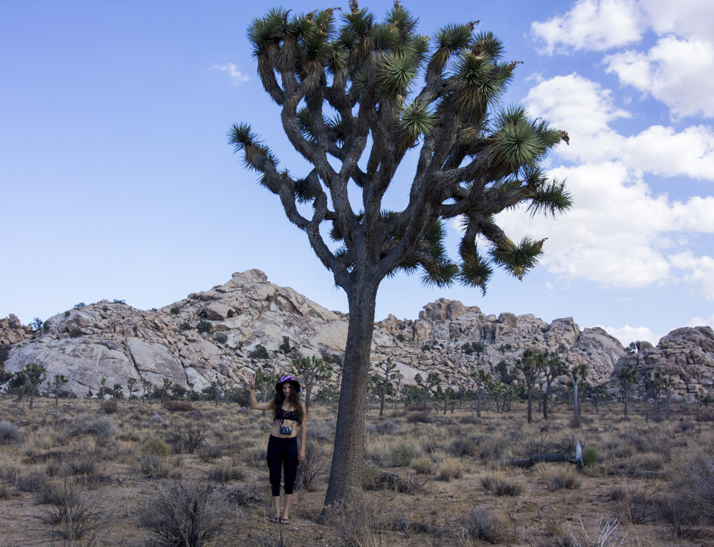 Joshua+Tree+California.jpeg