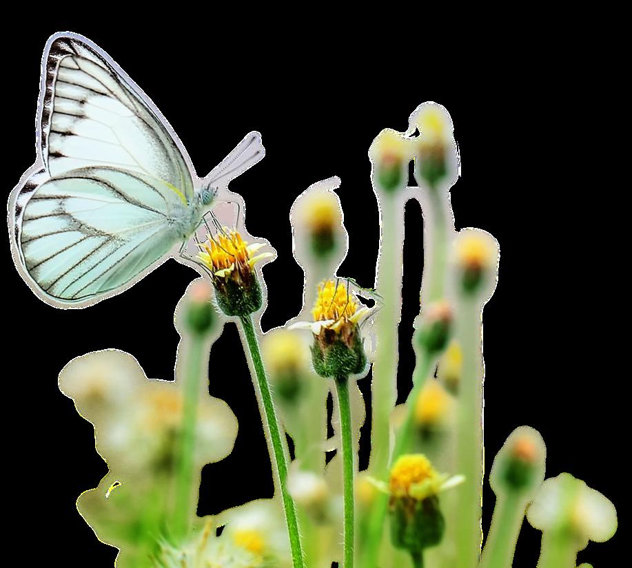 best matchmaker denve butterfly effect.png